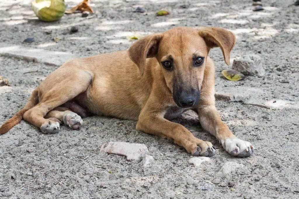 Stray Dog Saved by Police Officer,.