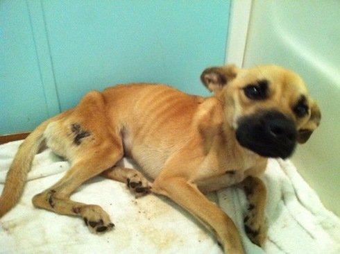 Stray Dog Saved by Police Officer