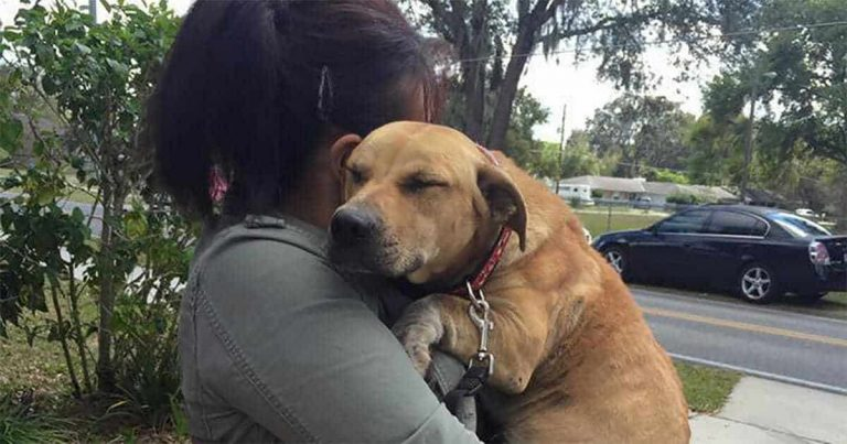 Abused Dog Covered in Scars But A Stranger Came Like a Hero To Save Him